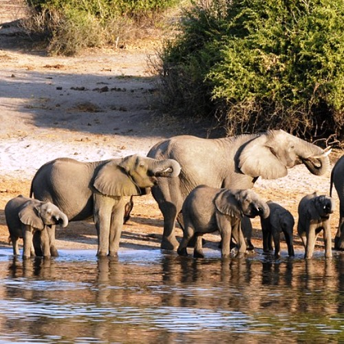 Botswana incentive